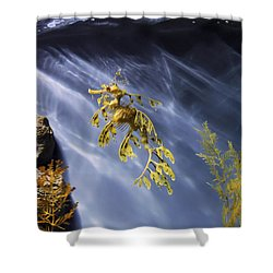 A Funny Seahorse--leafy Seadragon Shower Curtain by Angela A Stanton