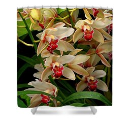 Shower Curtain featuring the photograph A Gathering by Rodney Lee Williams