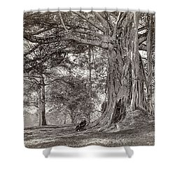 A Gentleman Sitting Beneath A Large Native Tree In British Ceylon Shower Curtain by Scowen and Co