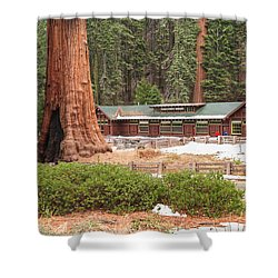 A Giant Among Trees Shower Curtain by Muhie Kanawati