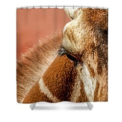 A Giraffe Shower Curtain