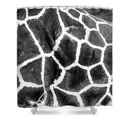 Shower Curtain featuring the photograph A Giraffe's Maze by Steven Santamour