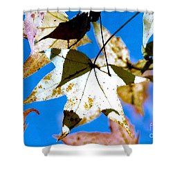 Shower Curtain featuring the photograph Autumn  In New Orleans Louisiana by Michael Hoard