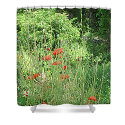 A Glimpse Of Poppies Shower Curtain by Pema Hou