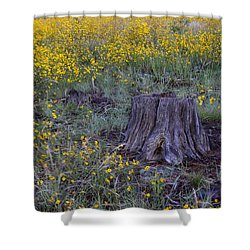 Shower Curtain featuring the photograph A Good Thinking Spot by Ruth Jolly