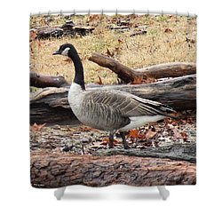 A Goose In Virginia Shower Curtain