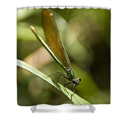 Shower Curtain featuring the photograph A Green Dragonfly by Stwayne Keubrick