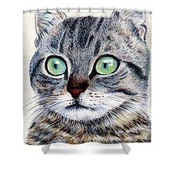 A Grey Tabby Shower Curtain by Jingfen Hwu