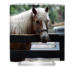 A Hilton Head Island Horse Shower Curtain