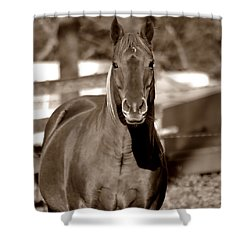 Shower Curtain featuring the photograph A Horse Is A Horse by Deena Stoddard