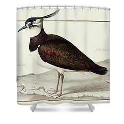 A Lapwing Shower Curtain