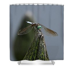 A Launch Pad Shower Curtain by Yvonne Wright