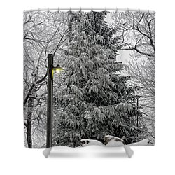A Light Snow Shower Curtain by Lois Bryan