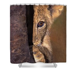 A Lion Cub Plays Hide And Seek Wildlife Rescue Shower Curtain by Dave Welling