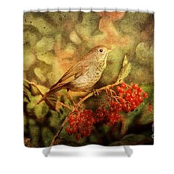 A Little Bird With Plumage Brown Shower Curtain