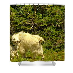 A Little Privacy Please Shower Curtain by Jeff Swan