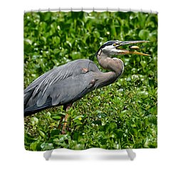 Shower Curtain featuring the photograph A Little Snack by Kathy Baccari