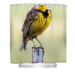 A Little Wet Shower Curtain
