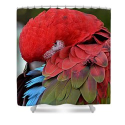 Shower Curtain featuring the photograph A Living Rainbow by Jodi Terracina