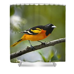 A Look To Remember Shower Curtain by Christina Rollo
