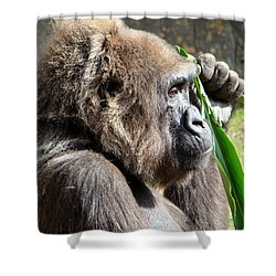 Shower Curtain featuring the photograph A Lovely Thought by Phyllis Beiser