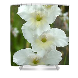 A Lovely White With A Hint Of Yellow Gladiolus Shower Curtain by Kim Pate