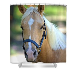 Shower Curtain featuring the photograph A Loyal Friend by Gordon Elwell