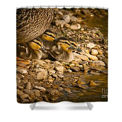 A Mother's Love Shower Curtain by Robert Frederick