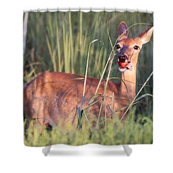 A Mouth Full Shower Curtain