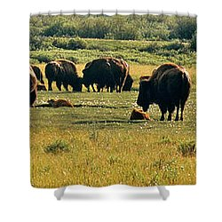A New Beginning Grand Teton National Park Shower Curtain by Ed  Riche