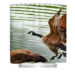A Pair Of Canada Geese Landing On Rockland Lake Shower Curtain by Jerry Cowart