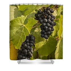 A Pair Of Clusters Shower Curtain by Jean Noren