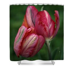 A Pair Of Tulips In The Rain Shower Curtain by Rona Black