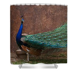 A Peacock Shower Curtain