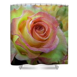 A Perfect Rose Shower Curtain by Renee Trenholm