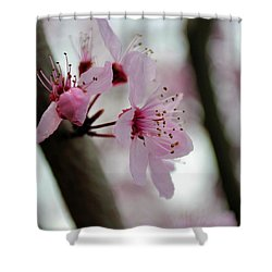 A Pink Flowering Tree Flower Shower Curtain