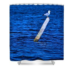 A Place To Rest Shower Curtain by Rita Mueller