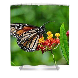 A Place To Settle Down Shower Curtain by Kathy Baccari