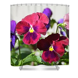 Shower Curtain featuring the photograph A Pocket Full Of Pansies by Jodi Terracina