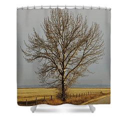 A Poplar Tree By The Side Of A Gravel Shower Curtain by Roberta Murray