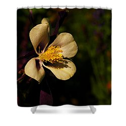 A Pretty Flower In The Sun Shower Curtain by Jeff Swan