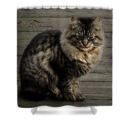Shower Curtain featuring the digital art A Quest by I'ina Van Lawick