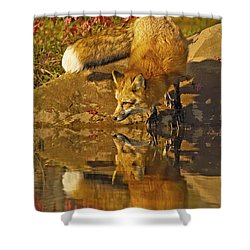 A Real Fox Shower Curtain