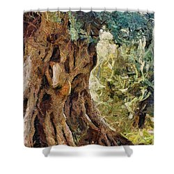 A Really Old Olive Tree Shower Curtain