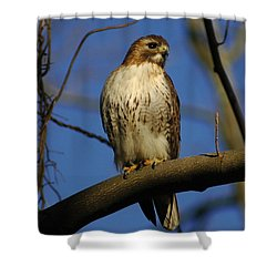 Shower Curtain featuring the photograph A Red Tail Hawk by Raymond Salani III