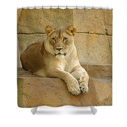 A Regal Presence Shower Curtain