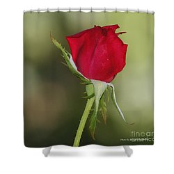 Shower Curtain featuring the photograph A Rose By Any Other Name by Debby Pueschel