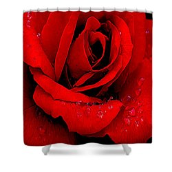 A Rose For A Sweetheart Shower Curtain by Bob and Nadine Johnston