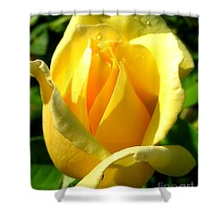 Shower Curtain featuring the photograph A Rose For My Friend by Janice Westerberg