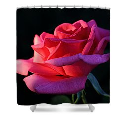 Shower Curtain featuring the photograph A Rose Is A Rose by David Andersen